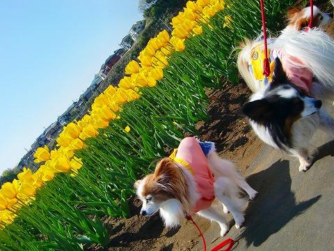 春の遠足 2015.4.16 4