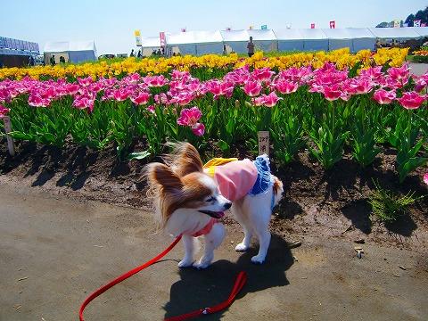 春の遠足 2015.4.16 5