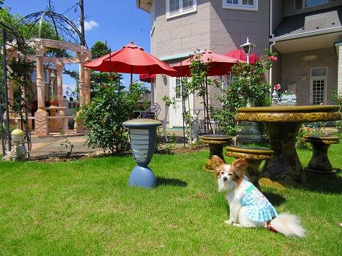 Cafe Rose garden 15.5.21