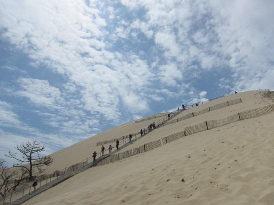 砂丘を見上げる