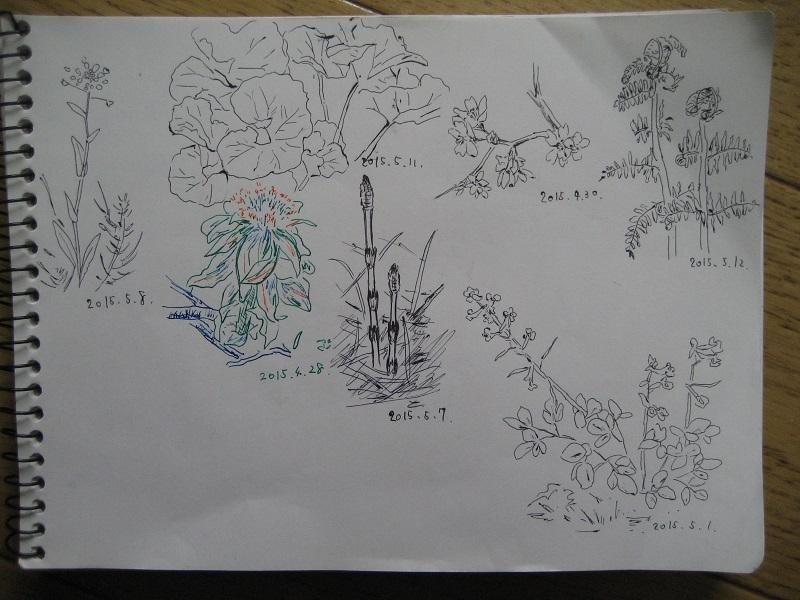 20150512_sketch.jpg