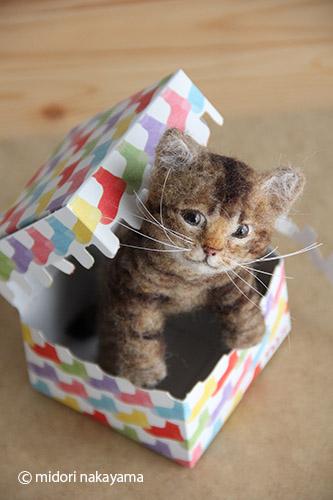 IMG_9341箱から仔猫