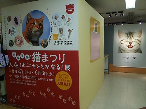 DSC_1597nyanfunabashi.jpg