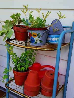 テラコッタ 植物