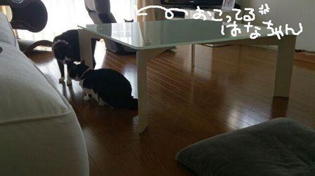 kenizumi45_R_20150315135352a13.jpg