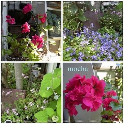 庭1-六月の