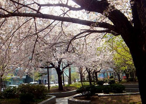 合同庁舎桜