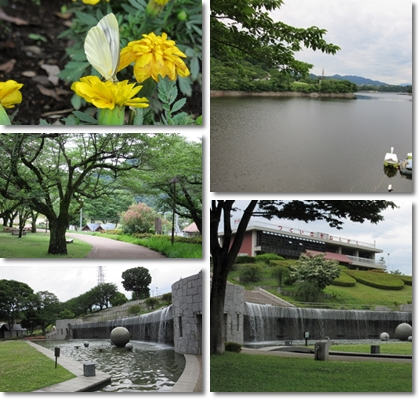 津久井湖公園水の苑池(2015_6)