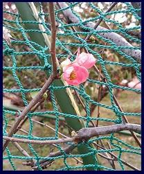 201401花