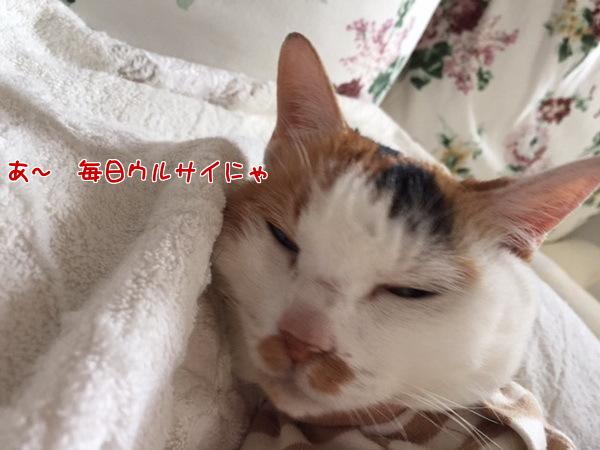 14suzu6.jpg
