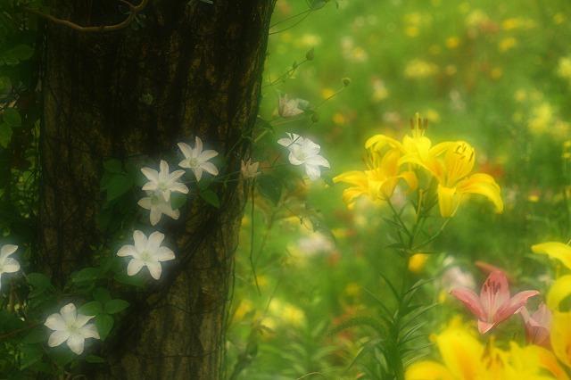 2015.6.20可睡ゆり園5