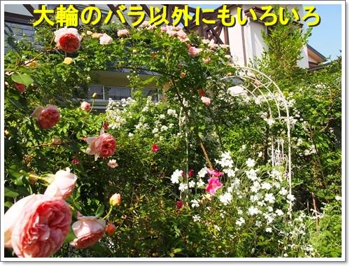 20150511_070.jpg