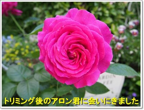 20150513_100.jpg