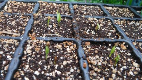 2017.3.23菜園