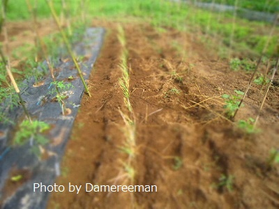 2015.6.11菜園5