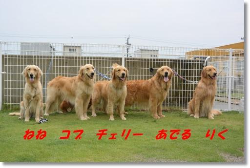DSC_6889.jpg
