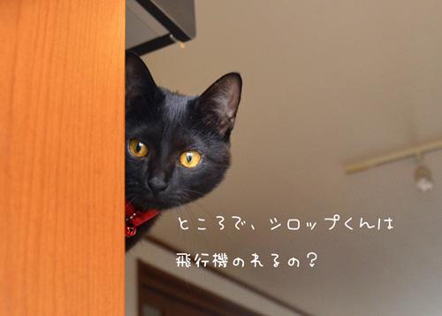 pDSC_7731.jpg