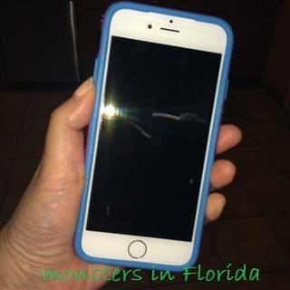 IMG_8511 (Mobile)
