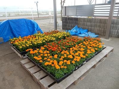 花植え 001