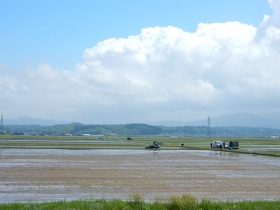 あさ田植え 011