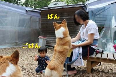 ぱん&ごはん姉弟