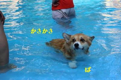 ぱんさんも泳ぐ。