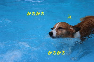 年間泳いでいるねーさん。