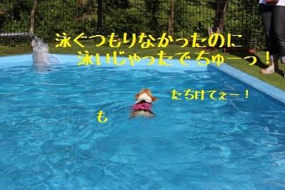萌香たん泳いどる!
