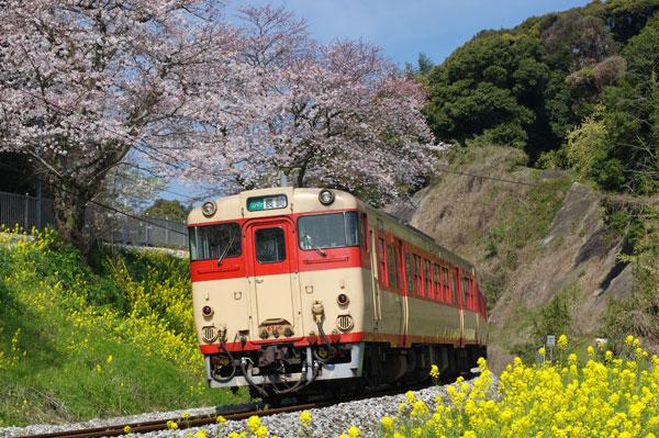 150330higashisono-okusa231D.jpg