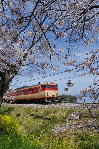 150330okusa-higashisono232D.jpg