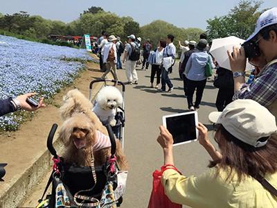 写真 2015-04-28 11 08 34(1)
