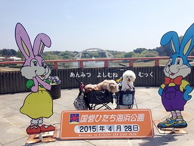 写真 2015-04-28 14 14 44(1)
