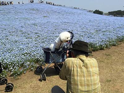 写真 2015-04-28 10 55 11(1)
