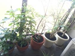 植木270521
