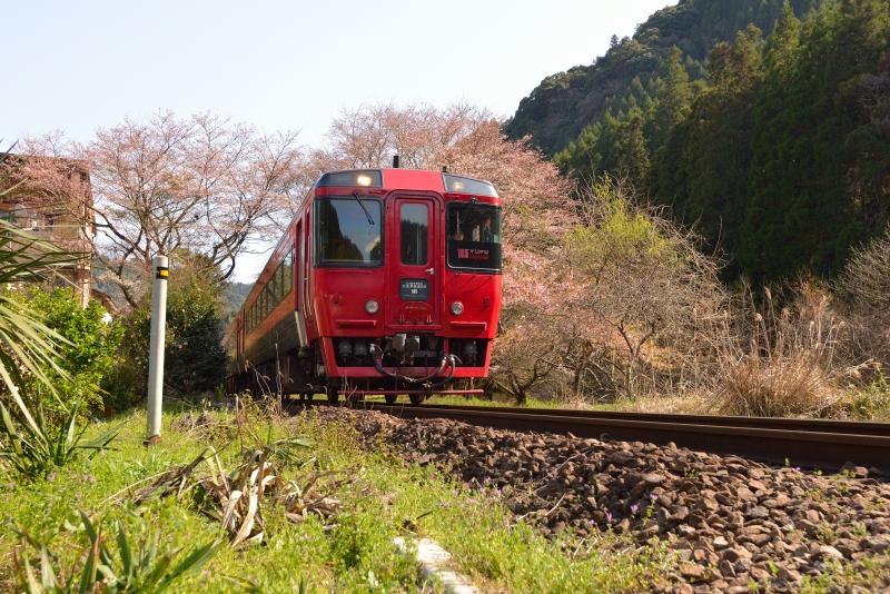 ゆふ4号と桜 (3)