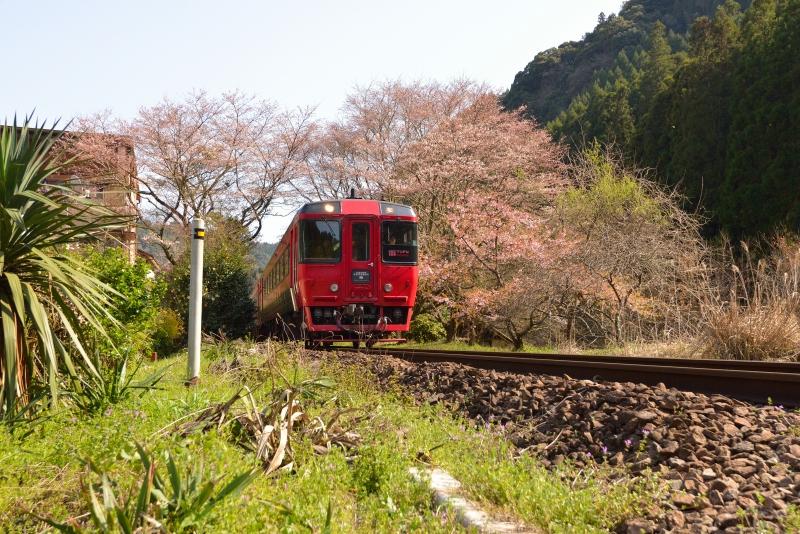 ゆふ4号と桜 (2)
