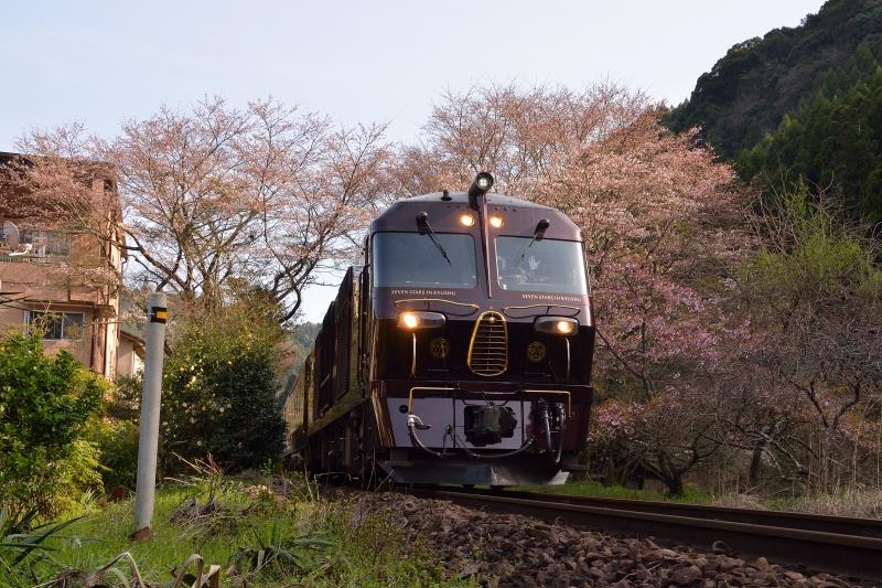 七つ星と桜 (4)