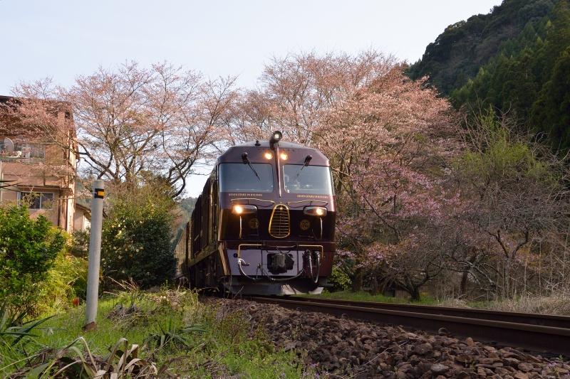 七つ星と桜 (3)