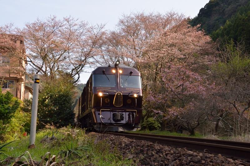 七つ星と桜 (2)