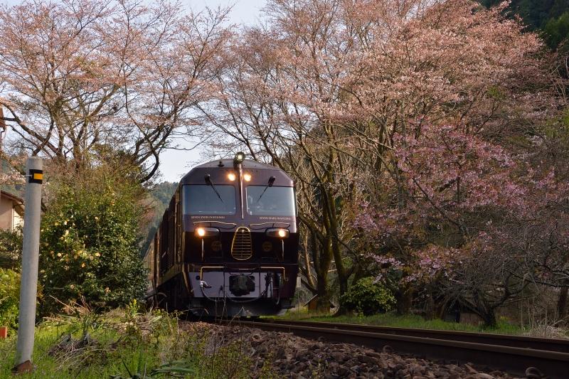 七つ星と桜 (1)