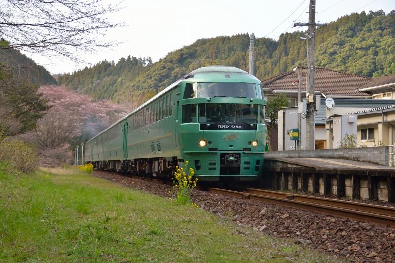 ゆふいんの森と桜 (3)