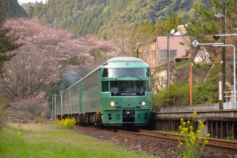 ゆふいんの森と桜 (1)