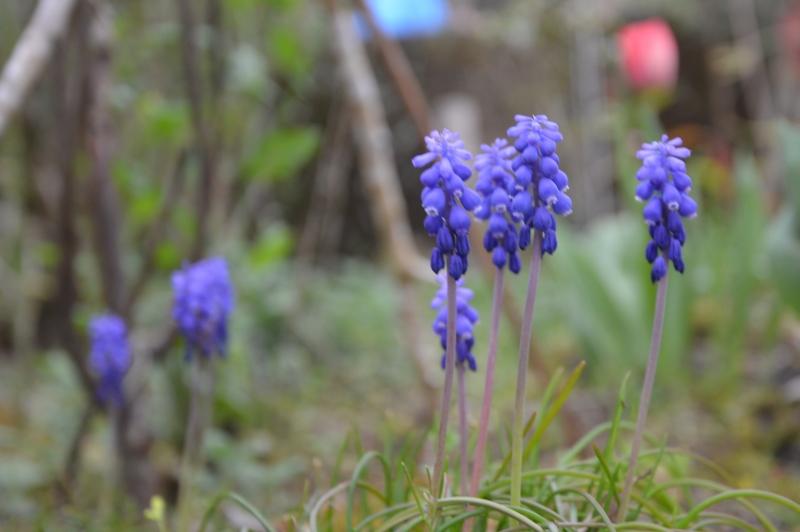 庭の花 (6)