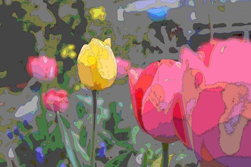 庭の花 (9)