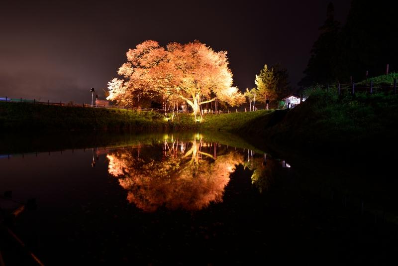 浅井の一本桜 (1)