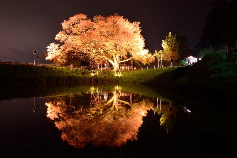 浅井の一本桜 (2)