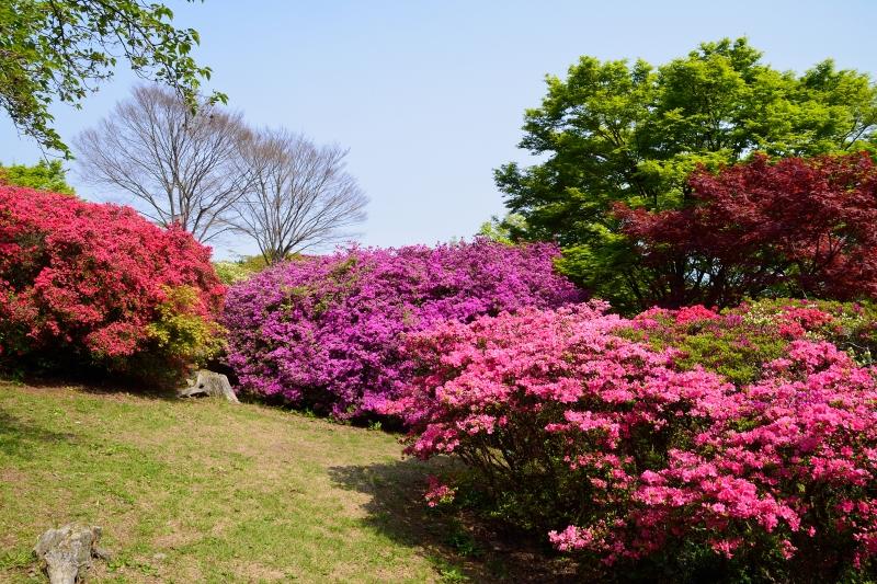 高良山 (2)