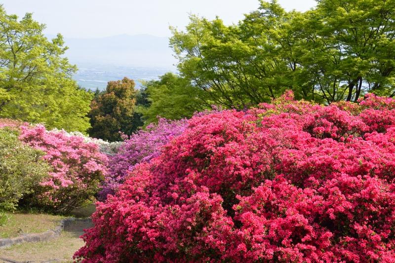 高良山 (1)