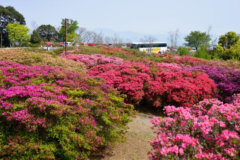 高良山 (9)