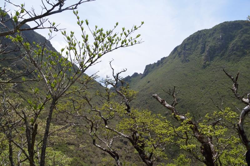 由布岳山開き (39)
